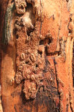 Red tree bark texture. Inside Stock Photo