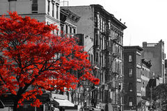 Red Tree on Black and White New York City Street Royalty Free Stock Photos