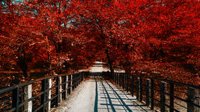 Red tree bridge Royalty Free Stock Photos