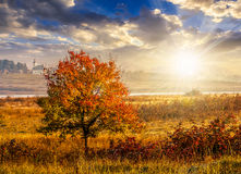 Red tree in the field near the village at sunset Royalty Free Stock Photography