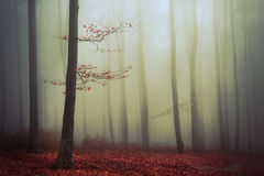 Red tree in the fog Stock Images