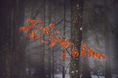 Red tree in the fog Royalty Free Stock Photo
