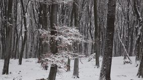 Red tree in the fog forest winter stock footage