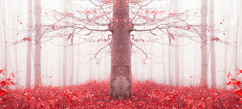 Red tree in a foggy forest Royalty Free Stock Image