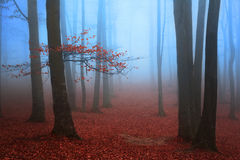 Red tree in the fogy forest. Autumn Royalty Free Stock Images