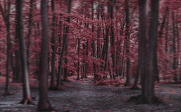Red Tree Forest Amazing Dream Stock Photo