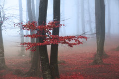 Red tree in the forest stock image