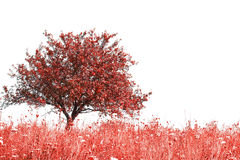 Red tree and grass. Isolated on white stock images