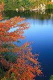 Red Tree on Lake Minnewaska Royalty Free Stock Image