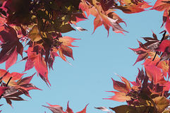 Red Tree Leaves Bordering Sky Stock Photography