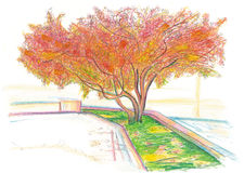 Red tree. Mahogany in the fall in the city. Color crayons Royalty Free Stock Photography