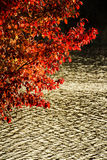 Red tree near floating river Stock Photo