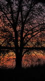 The Red tree. Silhouette sunrise on kake Royalty Free Stock Images