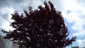 Red tree and strong wind good for meditation.  stock video