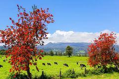 Red trees and cows in the Alpine meadow Royalty Free Stock Photography