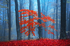 Red trees in the forest Royalty Free Stock Images