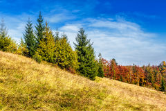 Red trees on meadow in mountains. Autumn mountain landscape. yellow, red and orange trees on the hill side meadow royalty free stock image