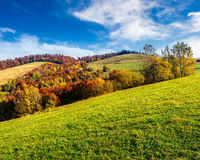 Red trees on meadow in mountains. Autumn mountain landscape. yellow, red and orange trees on the hill side meadow stock photography