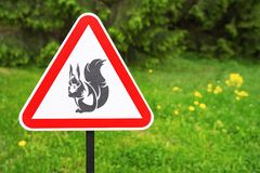 Red triangle sign warning  of the presence squirrels on the background of green trees in the park.  royalty free stock image