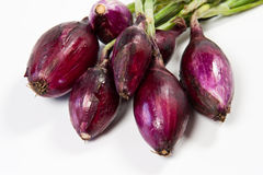Red Tropea onion Royalty Free Stock Photo