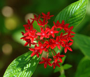 Red tropical flower. On green background Stock Photography