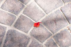 Red tropical flower petal on sett paved road. Abstract royalty free stock photography