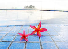 Red tropical flowers at misty resort pool stock photo