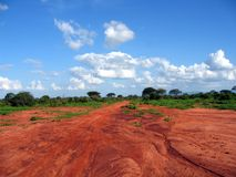 Red Tsavo. Tsavo red ground after the rain Royalty Free Stock Photography
