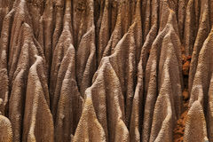 Red tsingy rock texture close up in Madagascar Stock Image
