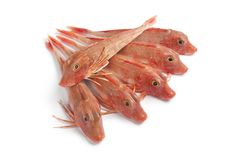 Red Tub gurnard fishes Stock Photography