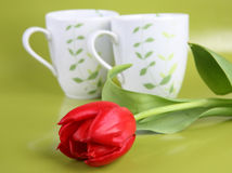 Red tulip Stock Photography