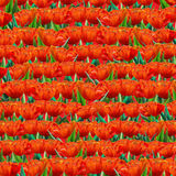 Red tulip pattern Royalty Free Stock Image