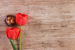 Red tulip with bird nest on vintage background. Top view, text space Royalty Free Stock Image