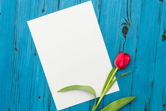Red tulip on a blue wooden board Stock Photos