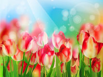 Red tulip with bokeh. EPS 10 Stock Photos