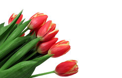 Red Tulip Bouquet Royalty Free Stock Photography