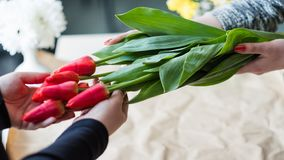 Red tulip bouquet floral gift present flower bunch royalty free stock photo