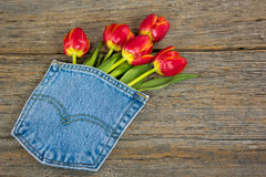 Red tulip bouquet in jean pocket Stock Photo