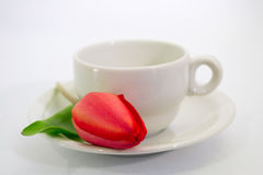 Red tulip and coffee cup Stock Images