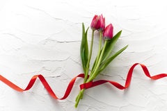 Red tulip flower. Red tulip bouquet on white wall Stock Photo