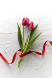 Red tulip flower. Red tulip bouquet on white wall Stock Images
