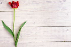Red tulip flower on wooden background. Top view, copy space. Stock Photos