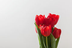 Red tulip flowers bouquet on grey background. Royalty Free Stock Photography