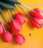 Red Tulip Flowers on Brown Surface Royalty Free Stock Photos