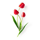 Red tulip flowers Royalty Free Stock Photography