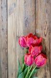 Red tulip flowers Stock Photos