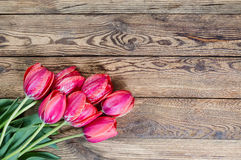 Red tulip flowers Stock Images