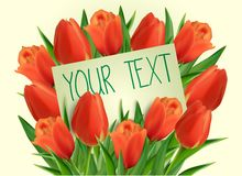 Red tulip flowers with paper card Stock Image