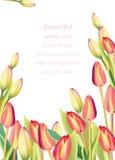 Red tulip flowers Spring season invitation background. Vector illustration Stock Images