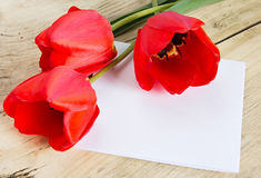 Red tulip flowers & white paper sheet. Royalty Free Stock Image